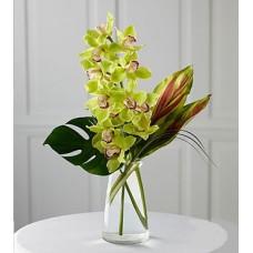 Buchet orhidee 8